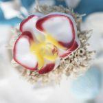 """Пластиковая форма """"Цветок орхидеи"""" (pc)"""
