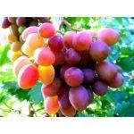 Виноград, фруктовая пудра сухая, 10гр