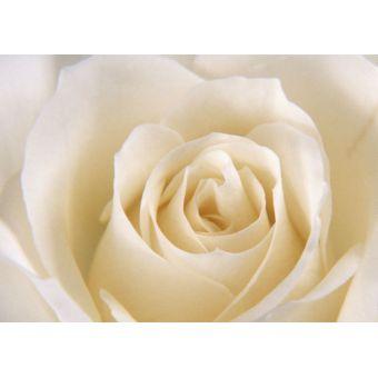 Роза белая, отдушка 10мл, Россия
