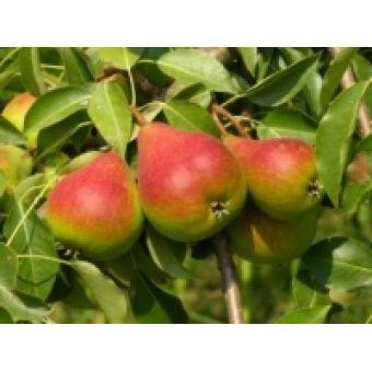 Груша, фруктовая пудра сухая, 10 гр, Китай