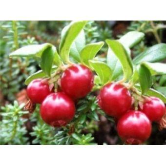 Клюква, фруктовая пудра сухая, 10 гр, Китай