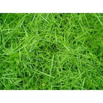 Скошенная трава, отдушка 10мл, Франция