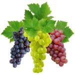 Виноградной косточки, масло рафинированное, 100 мл, Испания