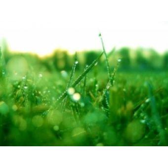 Зеленая трава, отдушка, 10 мл,Англия